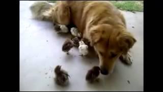 Как животные проявляют любовь)