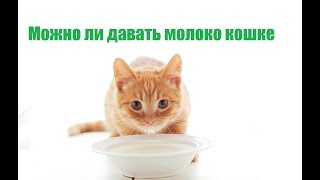 Можно ли давать молоко кошке