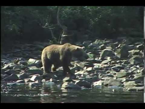 Gone Fishin' Lodge Alaska Bears and Silvers