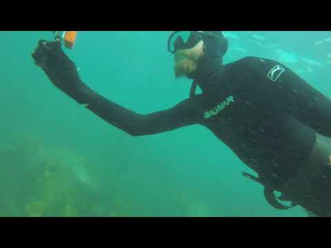 White Shark And King Fish Spearfishing Forster NSW