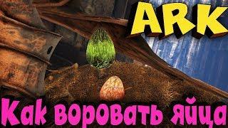 ARK - Выживание под землей! Жара и воры яиц! - Darkcrash