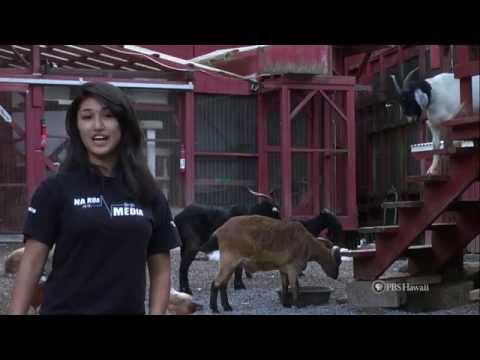 PBS Hawaii - HIKI NŌ Episode 525   Focus on Malama Honua   Full Program V3