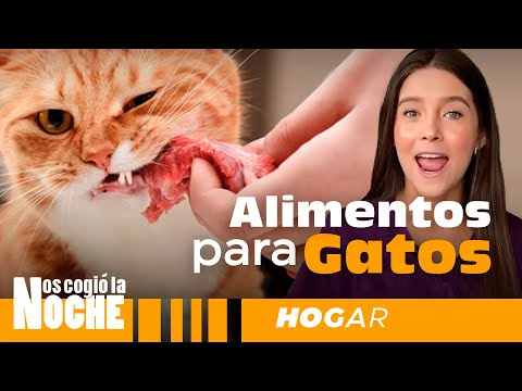 Alimentos Para Gatos, Lauvet - Nos Cogió La Noche