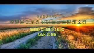 마음이 평온해지는 풀벌레소리_30분의여유,명상,휴식,자연,감성,ASMR