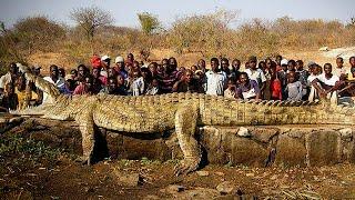 TOP 10 ANIMALES MÁS LETALES DE ÁFRICA thumbnail