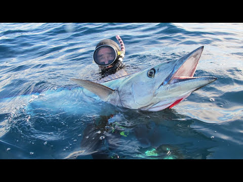 Spearfishing with Barry Paxman