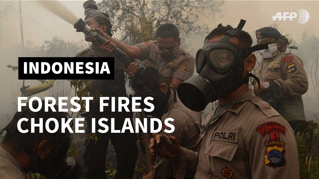 (INDONESIA, September 2019) Indonesian forest fires choke SE Asia | AFP