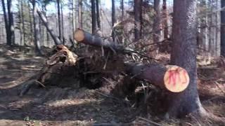 Łysy Koleś Chodzi Po Lesie i Gada Jakieś Śmieci
