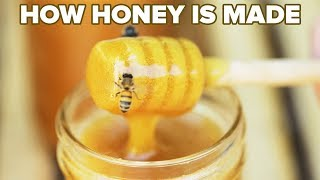 How Honey Is Made • Tasty