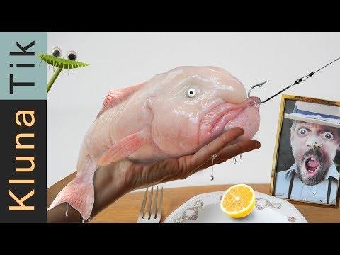 BLOBFISH CATCH & COOK   #44KLUNATIK COMPILATION    ASMR eating sounds no talk