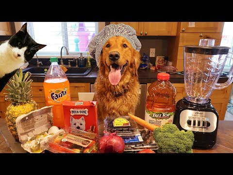 Funny Chef Dog Earl Makes Smoothies! Cat Makes A Mess