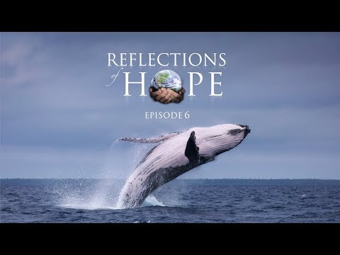Reflections of Hope Episode 06: Whale Song | Taj Pacleb