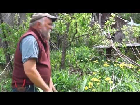 Overview of Plant Polycultures with Michael Phillips