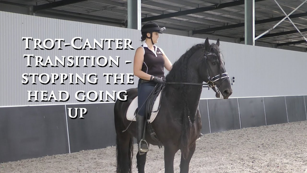 How To Stop Heading Up In Trot To Canter Transition  Dressage Mastery  Tv Ep61