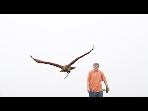 An Introduction to Falconry