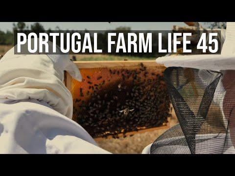 Portugal Farm Life - 45 - Summer Organic Vegetable Garden and Beehive maintenance