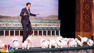 Puppies Predict the 2017 Kentucky Derby