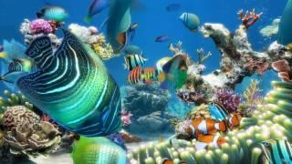 Sim Aquarium scene 2 (4K)
