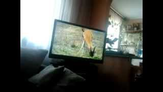 Собака смотрит телек