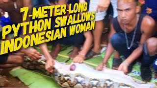 7-Meter-Long  Python Swallows  Indonesian Woman