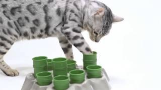 AiKiou Stimulo Cat Interactive Feeder