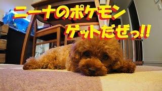 7月22日、ついに日本でもポケモンGOが配信されました。 ニーナの早速ポ...