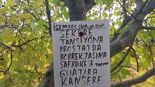 Manisa Yunusemre Demirci Köyü Şifalı Suyu