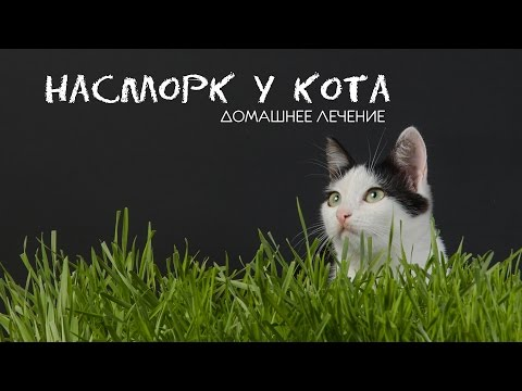 Консультации - аллергия на домашних животных
