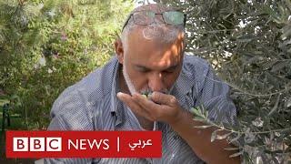 حبة زيتون فلسطينية في مواجهة مستوطن إسرائيلي