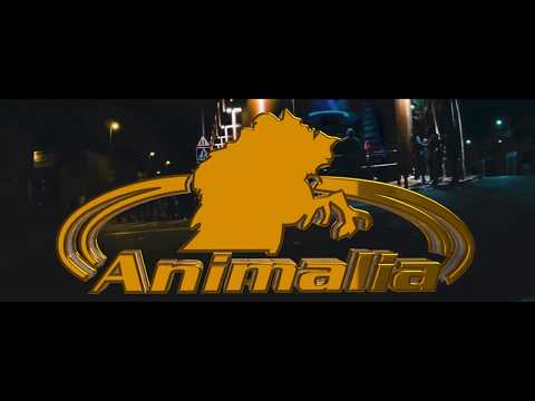 Movie Animalia B3 Sevilla