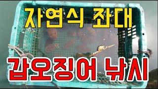 [갑프로] 갑오징어 낚시 자연식 좌대에서 즐거운 갑이 사냥 해보세요 잘나옵니다 Cuttlefish