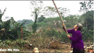 Mẹ thu hoạch Quả Cọ và Món Cọ Ỏm Ngọt Bùi Béo Ngậy (cochinchinensis) - Cơm Mẹ Nấu