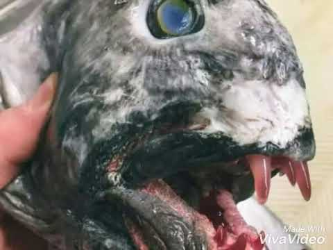Russian fisherman posts all his terrifying deep-sea discoveries
