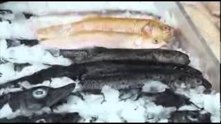 Рыболовы. Документальный фильм
