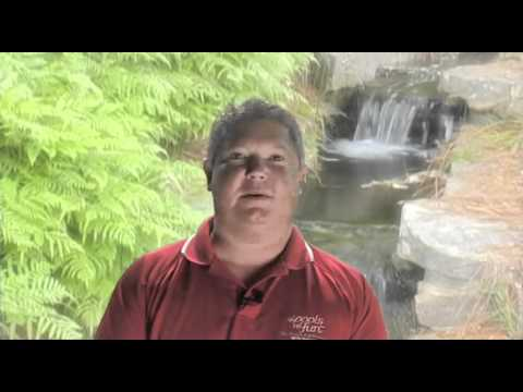 Free Videos From Pool Builder Indianapolis