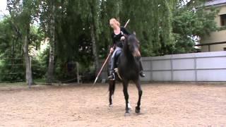 Подготовка реконструкторской лошади. часть 1. урок 2)
