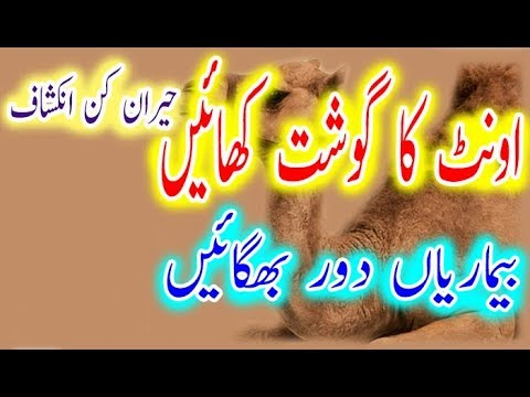 Eat Camel Meat & Leave Diseases | اونٹ کا گوشت کھائیں بیماریاں دور بھگائیں