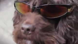 Game | Chó nhảy Gangnam Style | Cho nhay Gangnam Style