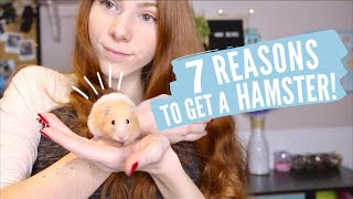 7 Reasons to Get a Hamster!