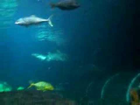 KEV IN OZ LAND: EPISODE 78 - SHARKS!!