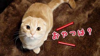 ご褒美のおやつが少ないので不満そうな猫たち