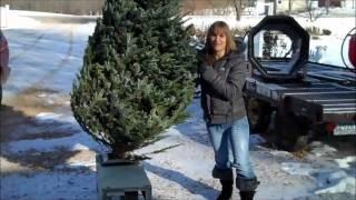 Casey Visits a Christmas Tree Farm