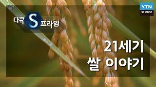 21세기 쌀 이야기 / YTN 사이언스