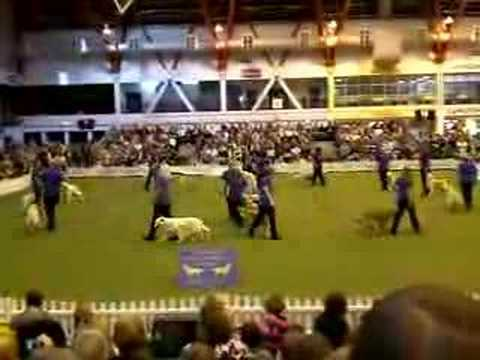 Southern Golden retriever Society Display Team