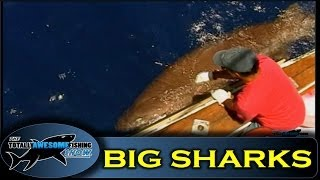 Sea Monsters  - Search for the 6 gill shark  - Totally Awesome Fishing Show