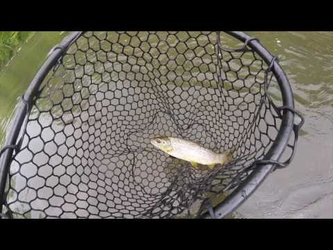 #24 - Penns Creek PA - Fishing the top 100 Trout Streams in America