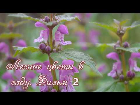 Лесные цветы в саду. Фильм 2.