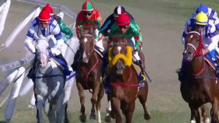 Carrera de Caballos Árabes Shadwell - 2° Arabian Races Stakes (Romulo)