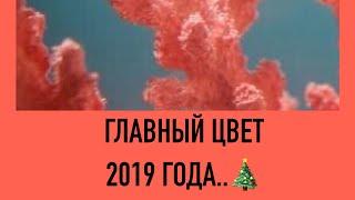 Главный цвет 2019 года ОБЪЯВЛЕН !