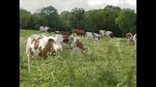 Vaches de France et d'ailleurs